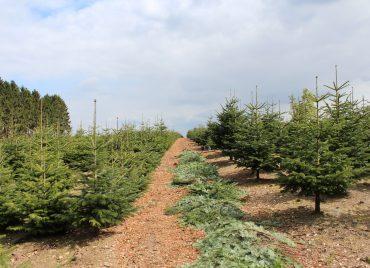 Weihnachtsbaumfeld 2