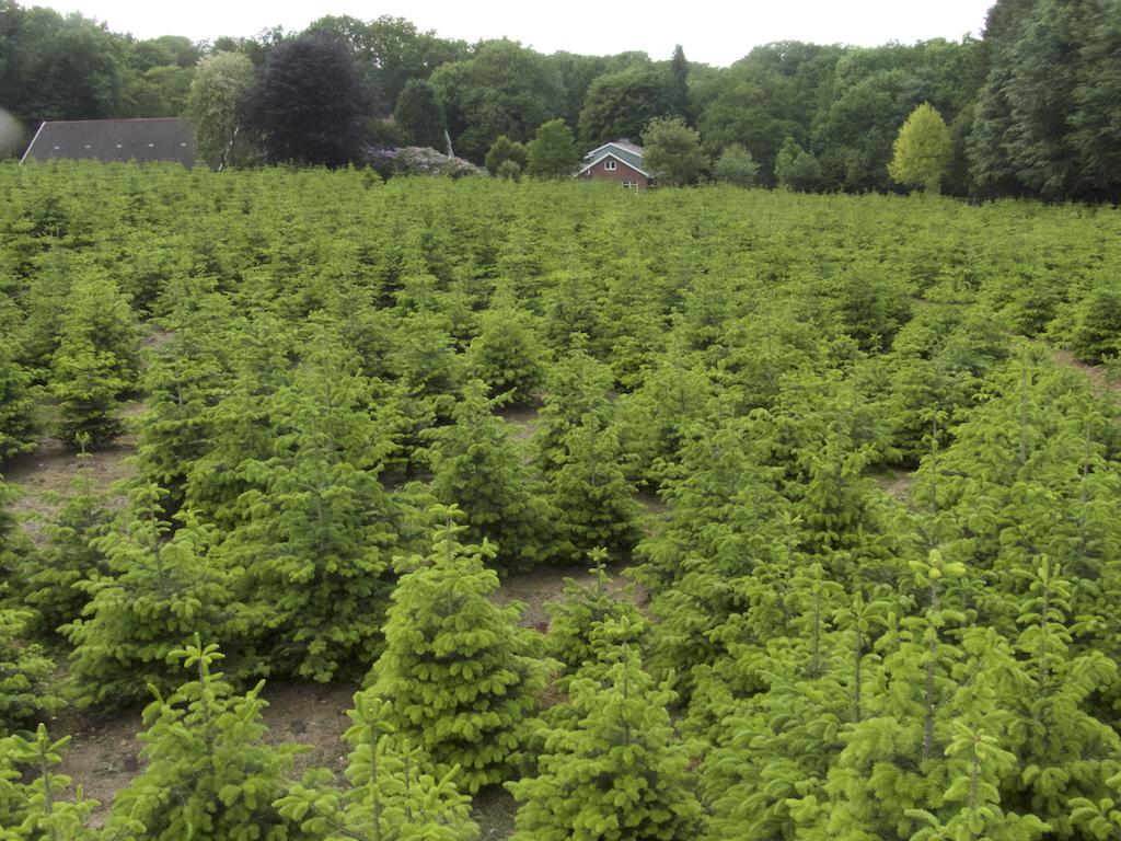 Überblick Weihnachtsbäume am Haus. Bis 4 Meter.